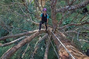 Expedition Malaysia: A Top-to-Bottom Rainforest Survey