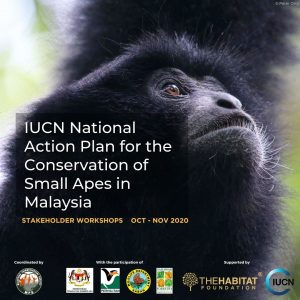 A national initiative to develop an Action Plan to conserve Malaysia's Small Apes