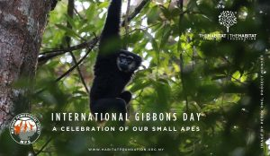 Raising awareness of our amazing small apes on International Gibbon Day 2020
