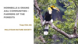 Hornbills and Orang Asli Communities – farmers of the forest