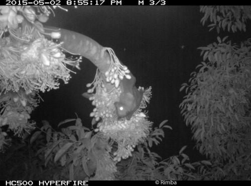 Camera trap footage provided insights into the feeding patterns of fruitbats.