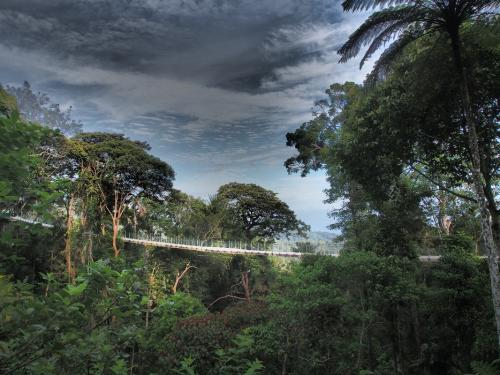 Langur Way canopy walk is the only suspension bridge of its kind in Southeast Asia