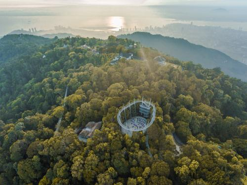 Curtis Crest Treetop Walk offers the opportunity to experience panoramic views of the forest